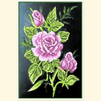 Night-rose