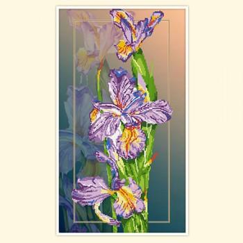 Rainbow irises