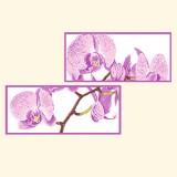 Дыхание орхидей