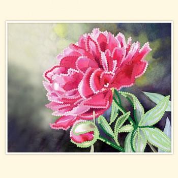 blossom peony